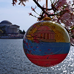 2014 Official Cherry Blossom Ornament
